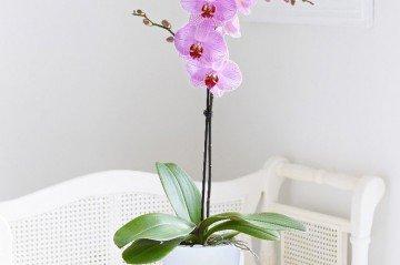 5 Muhteşem Bahar Çiçeği