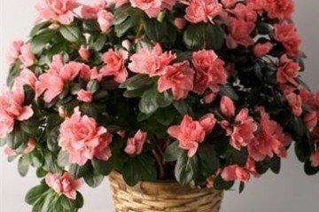 Soğuğa Dayanıklı Çiçekler Nelerdir
