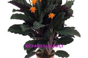 Balkonda Bitki Yetiştirmenin Püf Noktaları