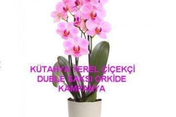 Mini Orkide Büyür mü?