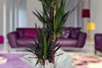 Yeşil Yapraklı Saksı Çiçekleri