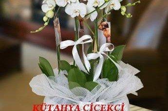 Orkide Çiçeği ve Bakımı