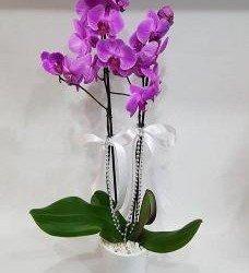 Çift Dal Lila Orkide